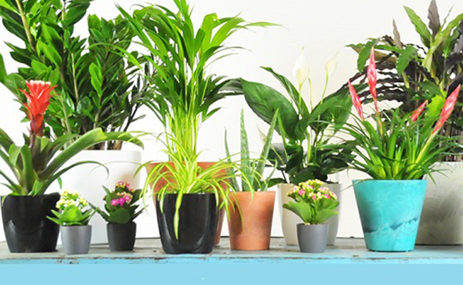 Airpurifying Plants