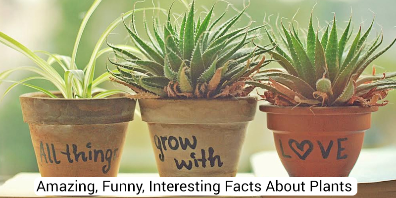 Amazing Funny Interesting Facts About Plants