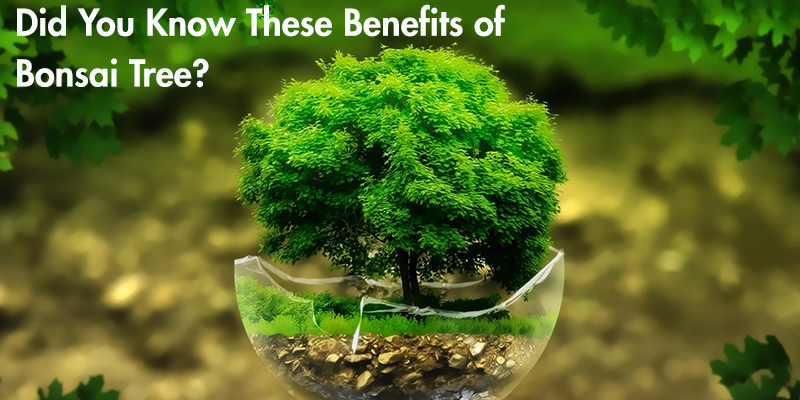 Benefits of Bonsai Tree