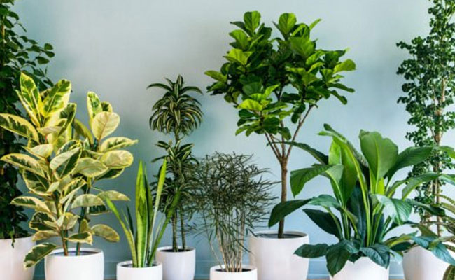 Bringing Houseplants