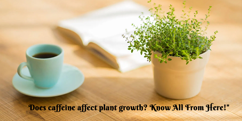 Does Caffeine Affect Plant Growth