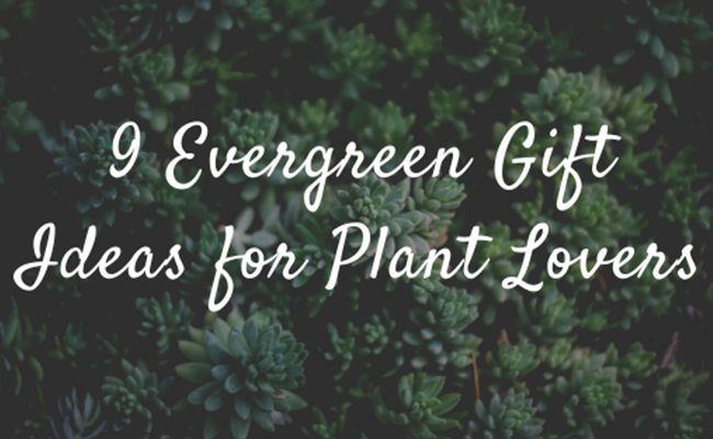 Evergreen Gift Ideas for Plant Lovers