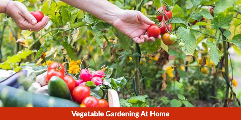 Favourite Vegetables To Grow At Home