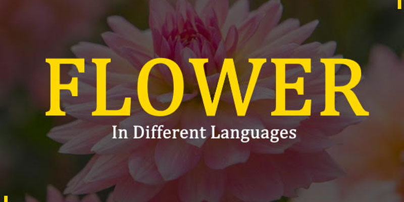 Flower in Different Languages