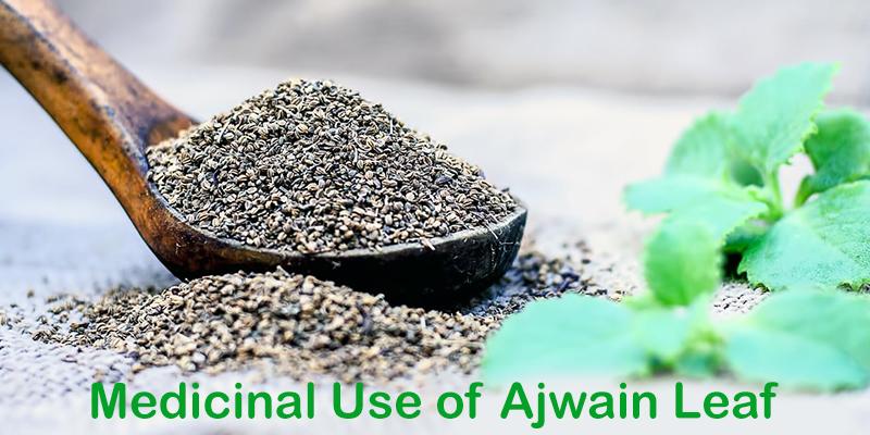 Medicinal Uses of Ajwain Leaf