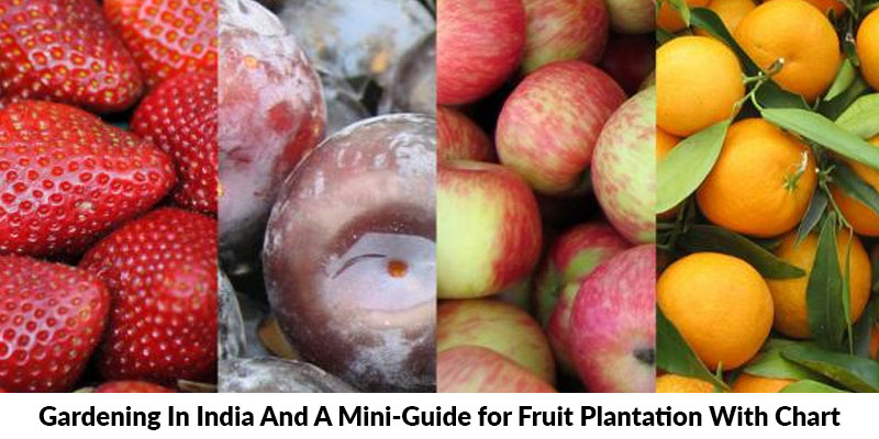 Mini-Guide for Fruit Plantation With Chart