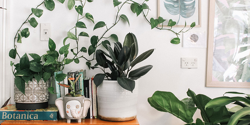 Nasa Recommended Best Air Purifying Indoor Plants In India,Small Apartment Furniture Layout For Small Living Room