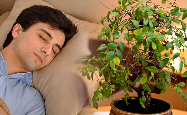 Plants Help you Sleep Better