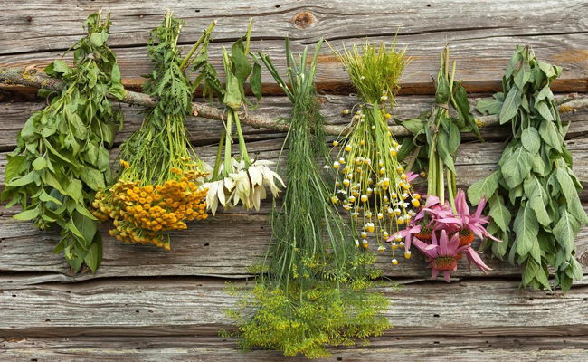 Powerful Medicinal Plants You Must Have At Home