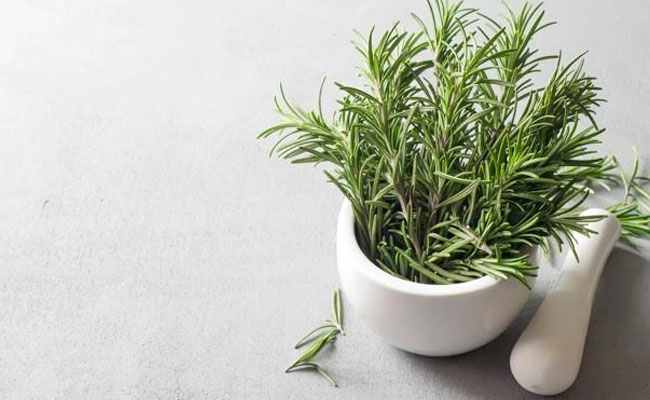 9 Best Mosquito Repellent Indoor Plants In India