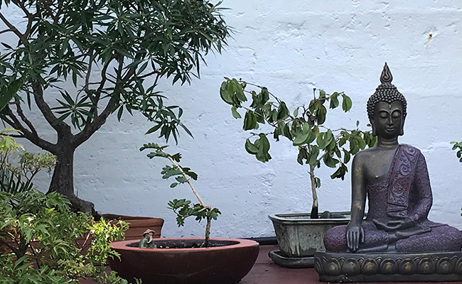 Bonsai Tree Spiritual Benefits