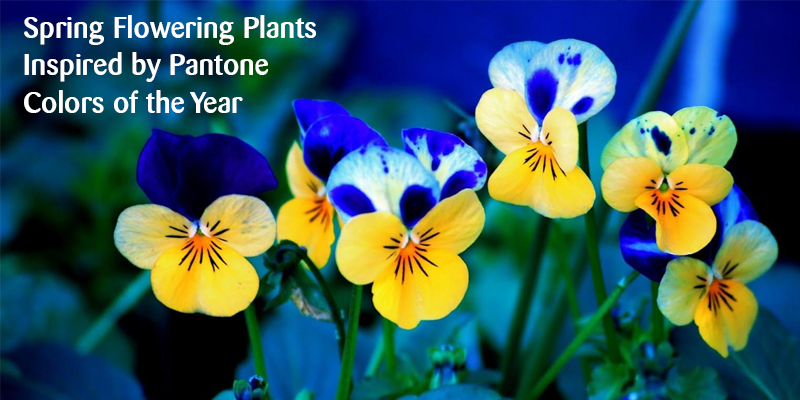 Spring Flowering Plants Inspired By Pantone Colors Of The Year