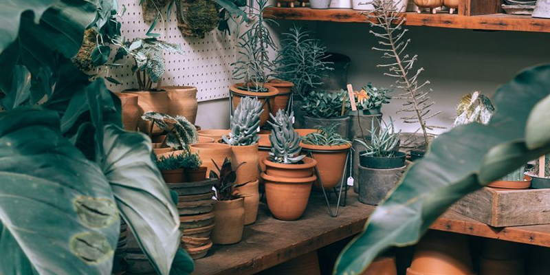 Steps to Prep your Indoor Plants For Summer