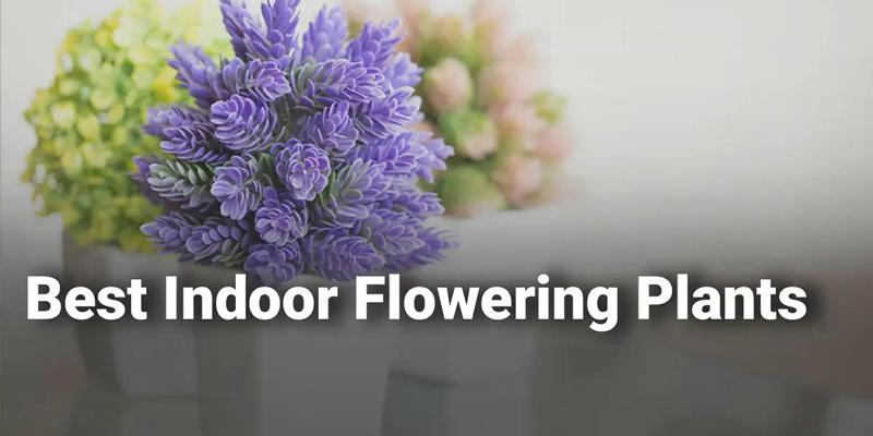 Stunning Indoor Flowering Plants