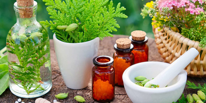 Top Homeopathic Plants, Remedies, and Their Uses