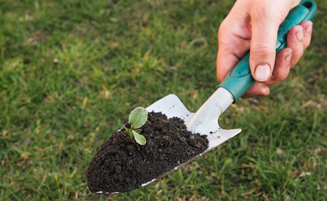 Trowel for Plants Caring