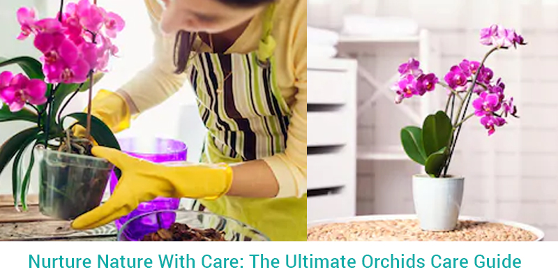 Ultimate Orchids Care Guide