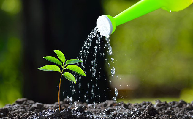 Tip 2- Every Plant have Different Water Needs