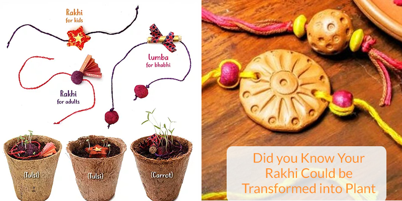 Rakhi Can be Transformed into Plant