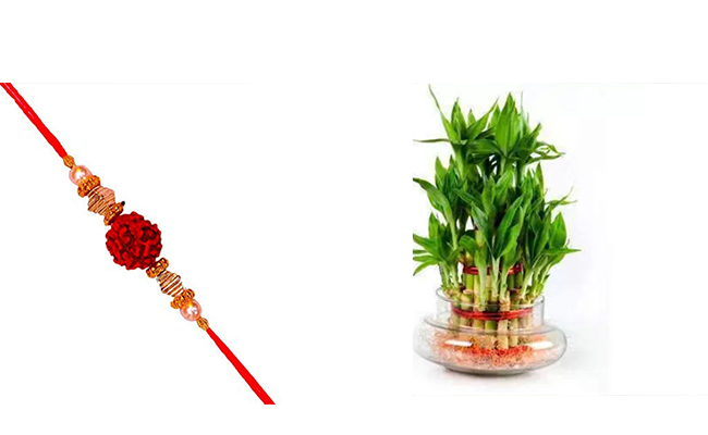 Rudraksha Rakhi with Bonsai plant