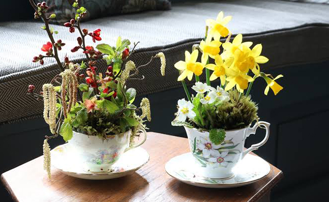 Teacup and Saucer flower