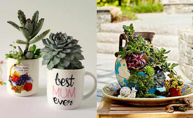 DIY mug planter