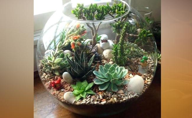 Terrarium Plants - DIY Rakhi Gift