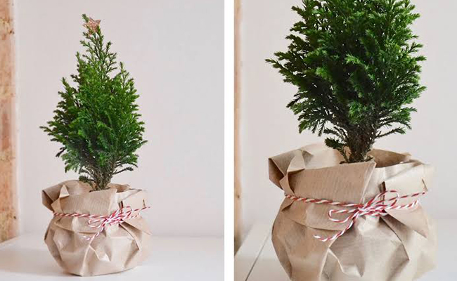 household plant gifts