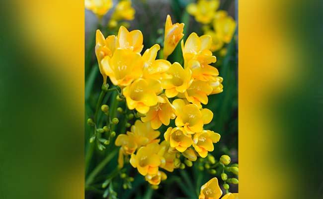 anniversary gift flower