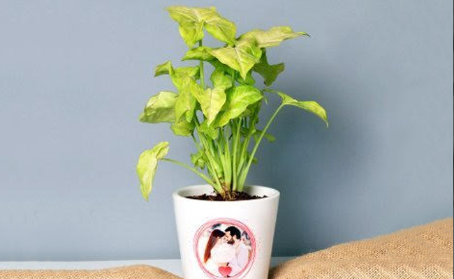 personalised plant