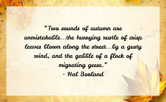 Fall Season Quote 24