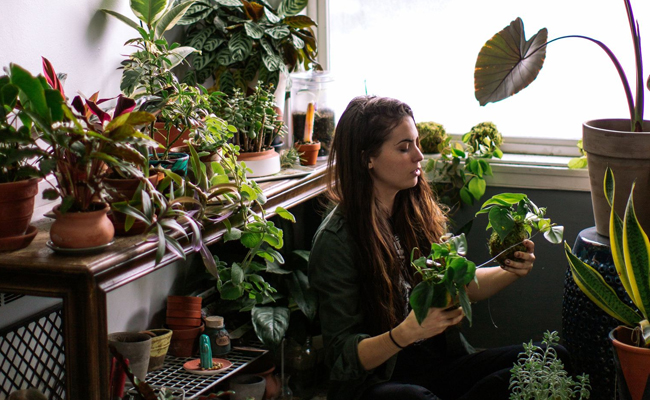 Blissful Plant as a 23rd Birthday of Girl