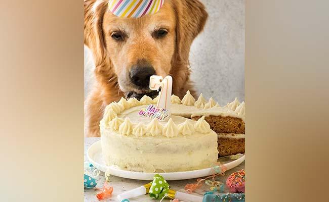 Peanut Butter Delight Dog Birthday Cake
