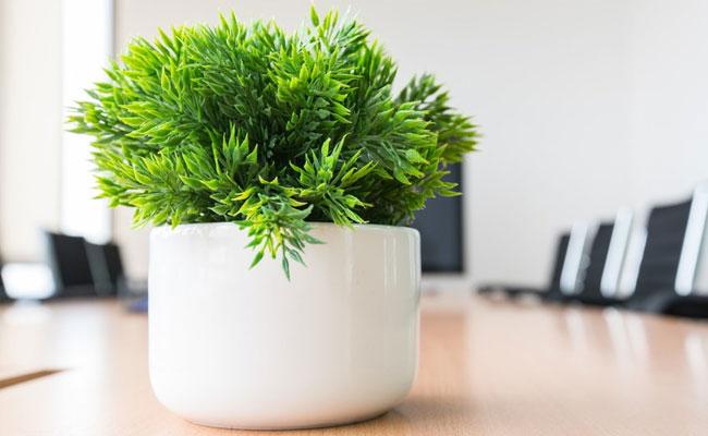 Customised Plants