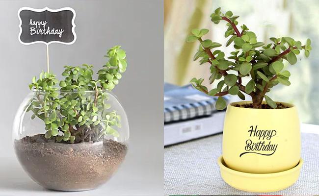 Customised desk plant for employee