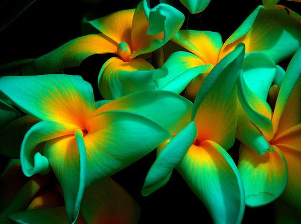 Top 15 Most Exotic Flowers Around The World