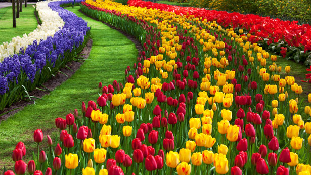 The five best tulip gardens in India
