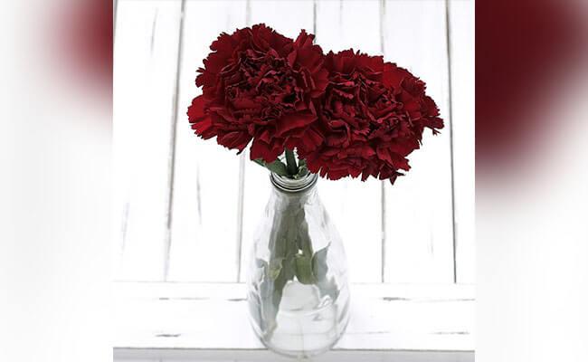 Carnations for Lover