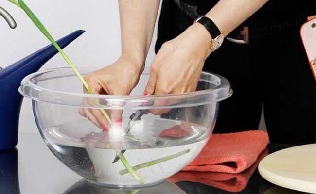Cut stems under water