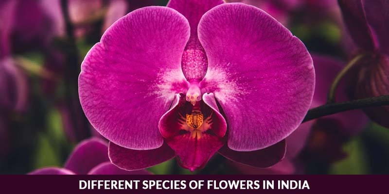 Different species of flowers in India