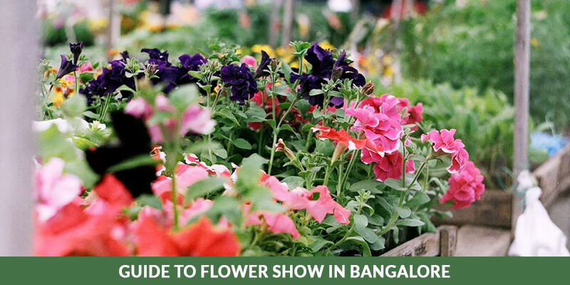 flower show in bangalore