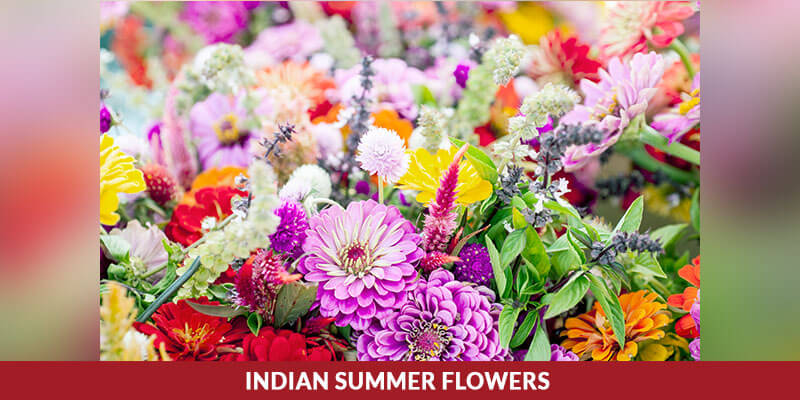 Indian Summer Flowers