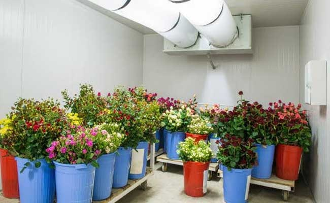 Keep flowers in a cool place not in direct sunlight