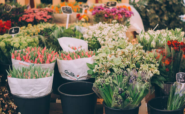 Lalbagh Gardens flower show