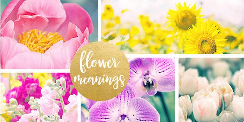 Learn the Symbolic Meaning of Popular Flowers