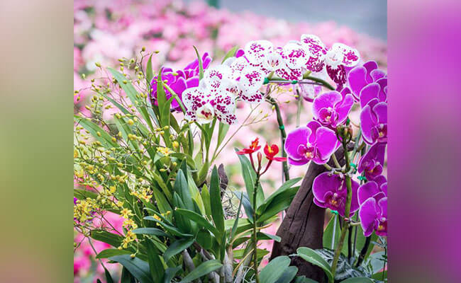 Orchids for Lover