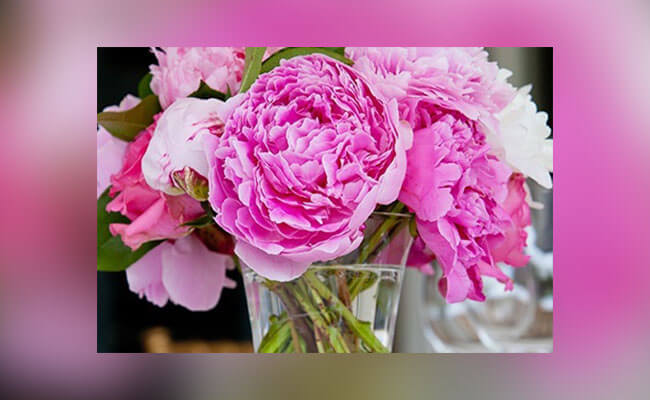 Peonies for Lover