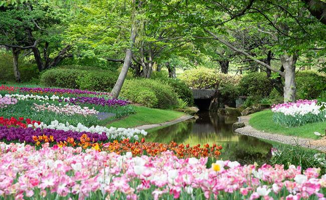 Rock botanical gardens in India
