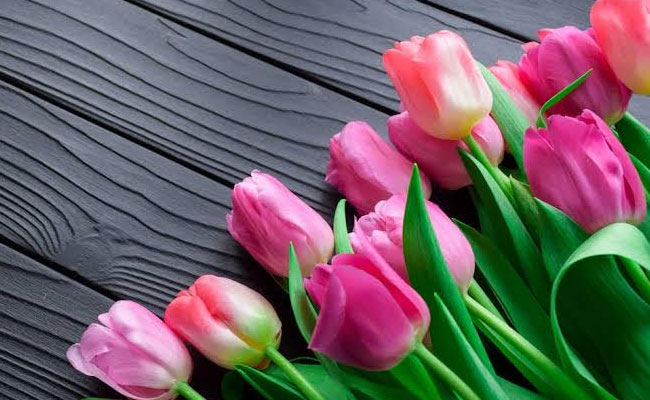 Tulips Symbolic Meaning