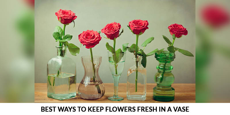 5 Best Ways To Keep Flowers Fresh In A Vase